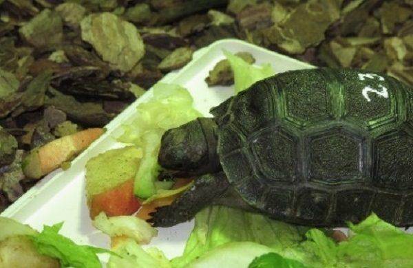 El SOIVRE participa en el decomiso de 76 tortugas transportadas de manera ilegal